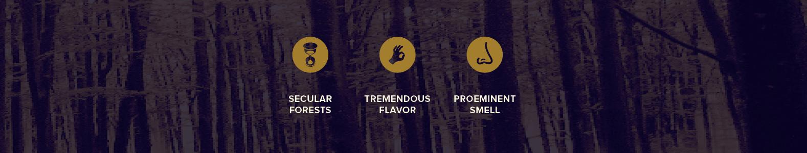 bio-pico-truffle-forrests