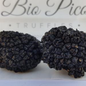 black-truffles-biocpiotruffles